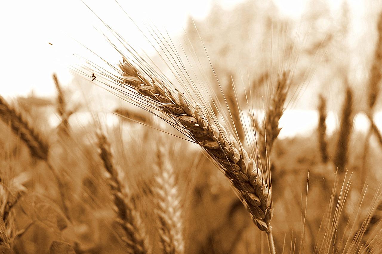 La barre de céréales, une bonne alternative minceur ?