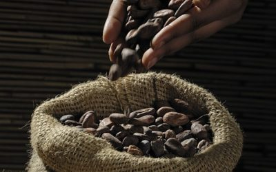 Manger du chocolat sans prendre de poids !
